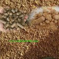 قیمت سویا دامی فله بارگیری از اصفهان