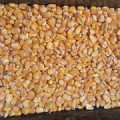 نرخ خرده ذرت درجه یک برای خوراک دام چقدر است