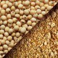 خرید سویا هندی از بندر امام